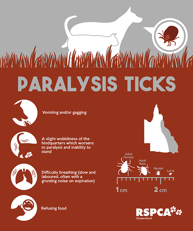 Symptoms your pet might display if it has a paralysis tick